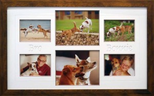 Pet Dog Collage with Names